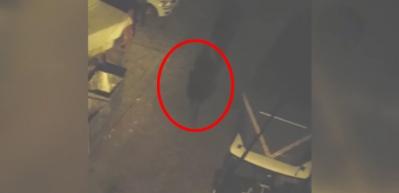 Caddeyi çekerken cinayeti kaydetti!