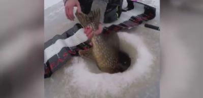Dev balığı yakaladıktan sonra...