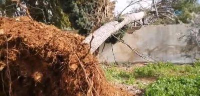 Gazze'de fırtına, ağaçları kökünden söktü