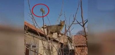 Kedi fareyi böyle köşeye sıkıştırdı