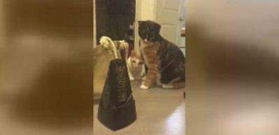 Kedilerin metronomla imtihanı!