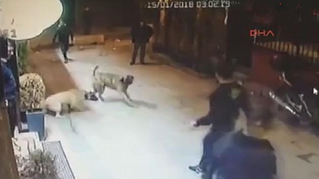 Sokak köpeğine kemerle saldırıp bıçakladılar