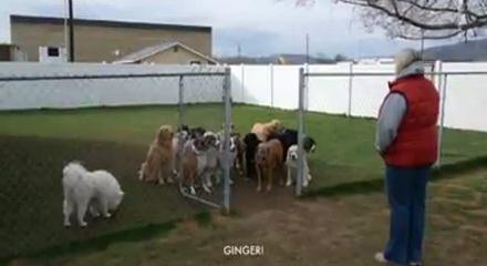 Böyle uslu köpek görülmedi! Dışarı çıkmak için...