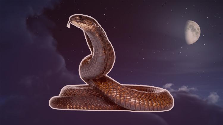 Rüyada yılan görmek ne anlama gelir? Kötü mü yorumlanır?
