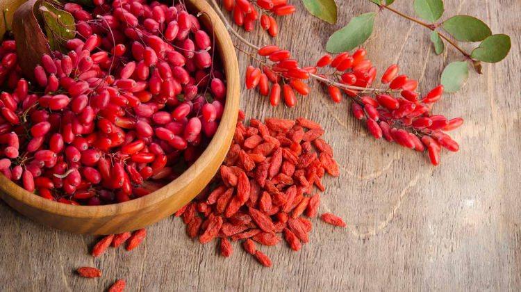 Goji berrynin (Kurt üzümü) faydaları nelerdir?