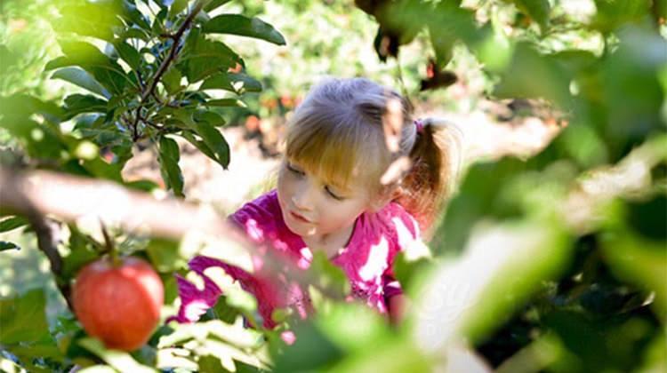 Rüyada ağaçtan meyve toplamak ne anlama gelir? Rüyanın detaylı tabiri!