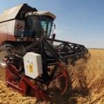 Fakıbaba: Dünyanın tahıl ambarı Türkiye olacak