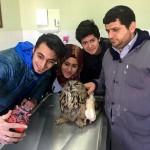 Yaralı puhu tedavi altına alındı
