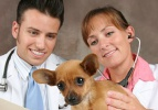 750 veterinere uygulamalı eğitim