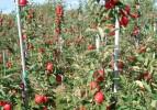 Huzurevi bahçesinde sebze yetiştiriyor
