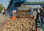 Şekerde 5,7 milyon tonluk arz fazlası var!