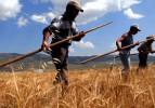 Çiftçilere 100 lira küçük aile işletmesi desteği